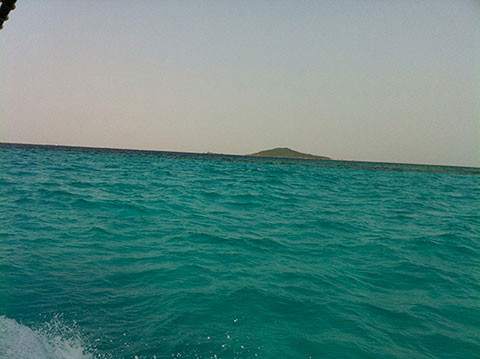 宮古島の海の魅力_サンゴ礁編