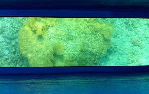 宮古島のグラスボートからみるサンゴ礁