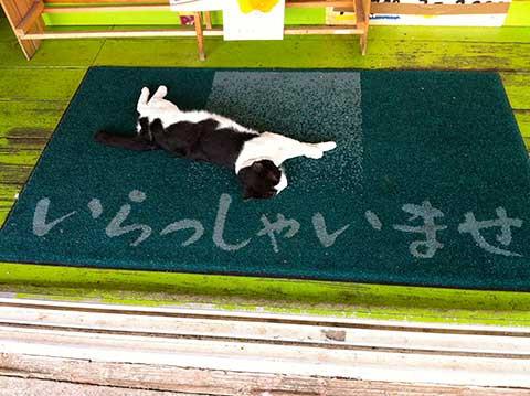 130717_bl_miyako_cat_welcome