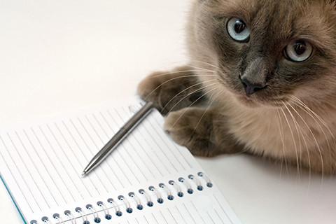 須崎動物病院_ペット食育協会共催_愛犬・愛猫の手作り食に少しでも不安を感じてる方が不安を解消できるセミナー