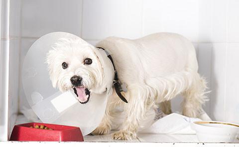 ペットの病気の原因を探るセミナー2014(皮膚病・アトピー性皮膚炎編)須崎動物病院