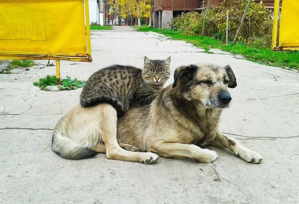 Dogcat002_2