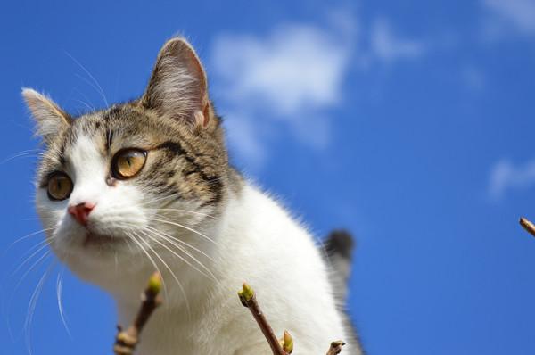 Cat1361967_1280