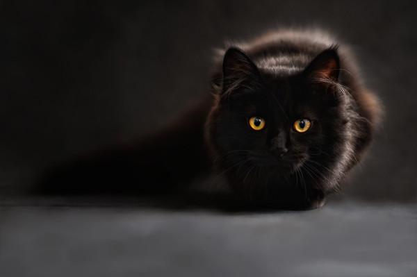 Cat694730_1920